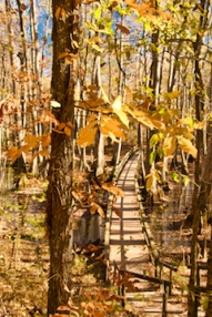 Cypress Swamp1 copy