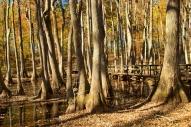 CypressSwamp5 copy