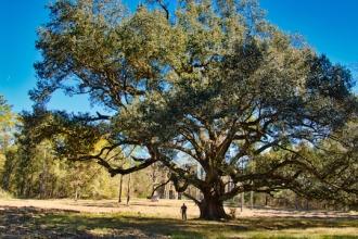 Tree2 copy