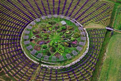 MDRUM_Lavender_Labyrinth-2-e1499685768435-1500x1000