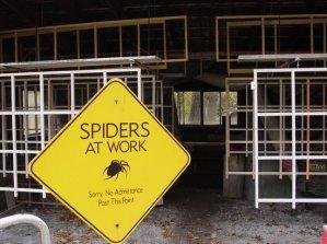 spiderwebfarm