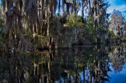 okefanokee swamp2